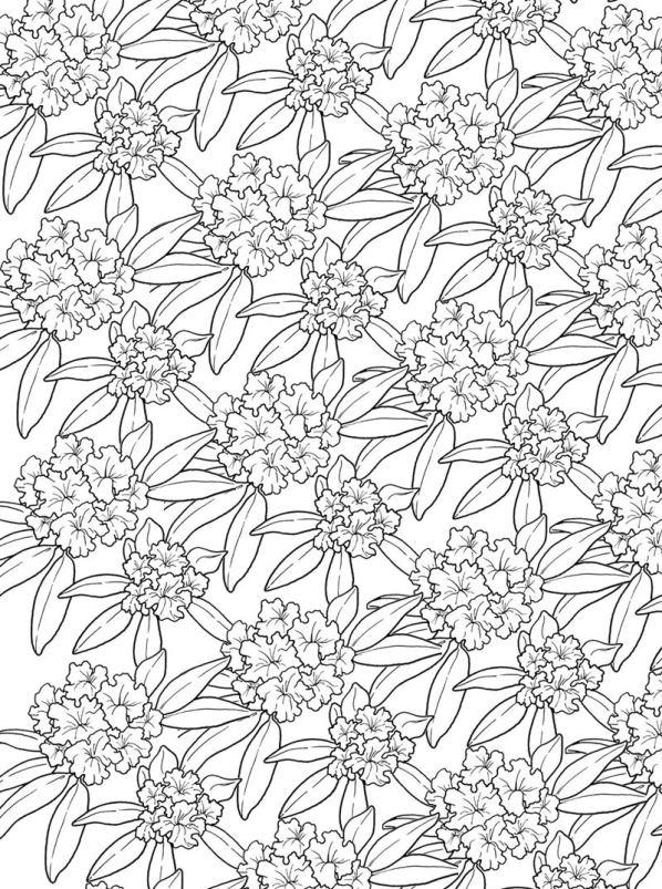 kleurplaten en zo 187 kleurplaten bloemen voor volwassenen