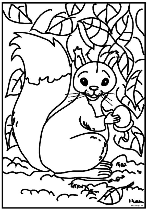 Kleurplaten Herfst Eekhoorn.Eekhoorn Kleurplaat