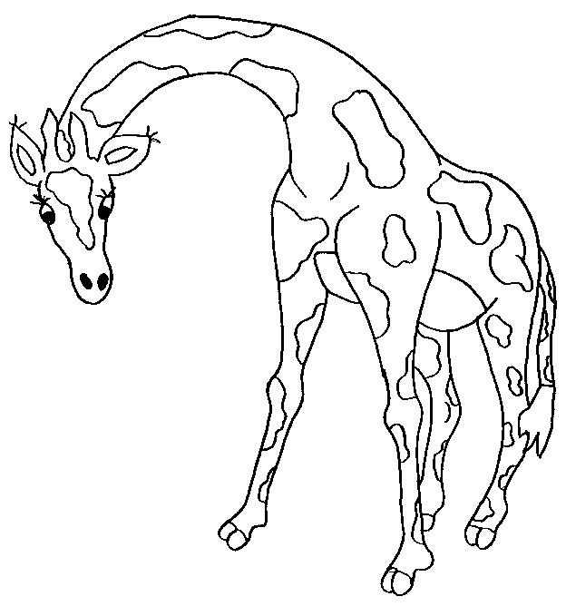 Kleurplaten Kleurplaat Van Giraffe