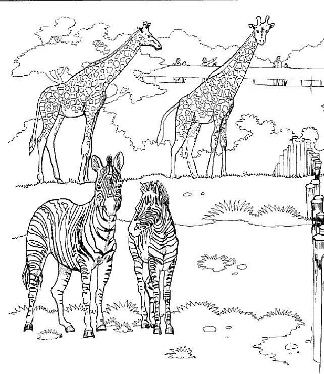 Kleurplaten Van Giraffen.Kleurplaten En Zo Kleurplaten Van Giraffe