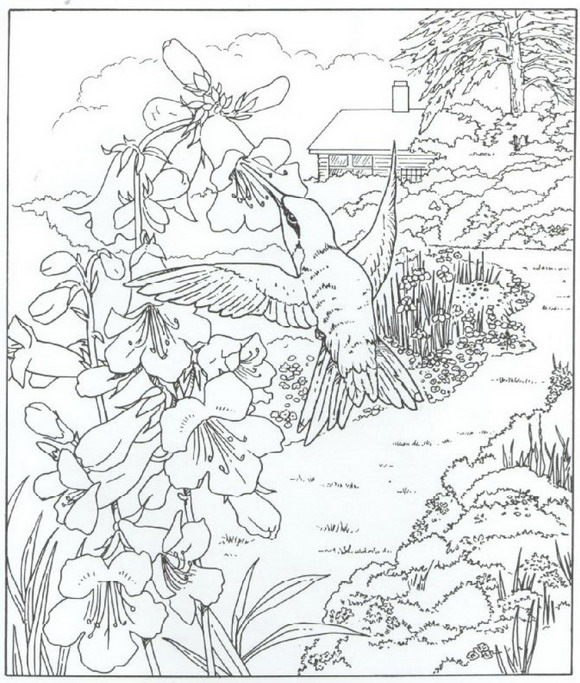 colorama coloring pages colored - photo#5