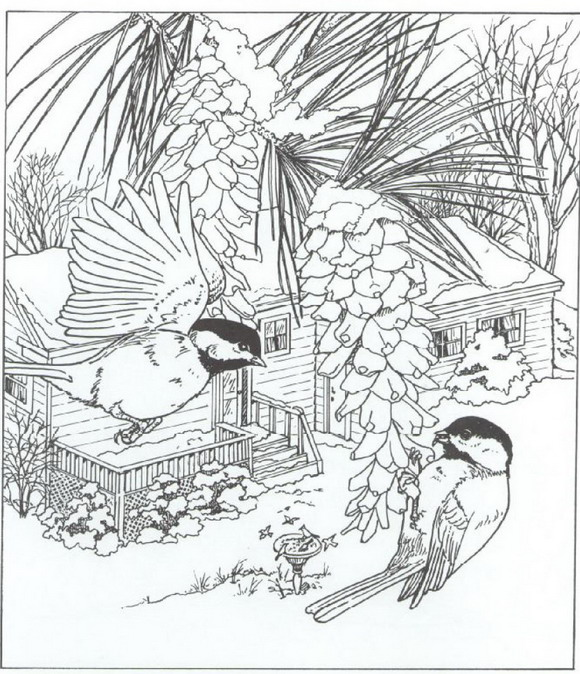 difficult bird coloring pages - photo #16