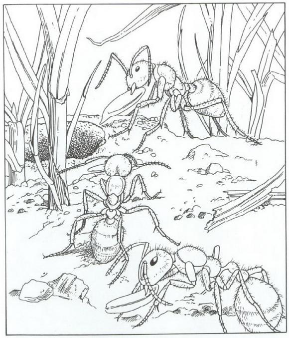 kleurplaten en zo 187 kleurplaat mieren