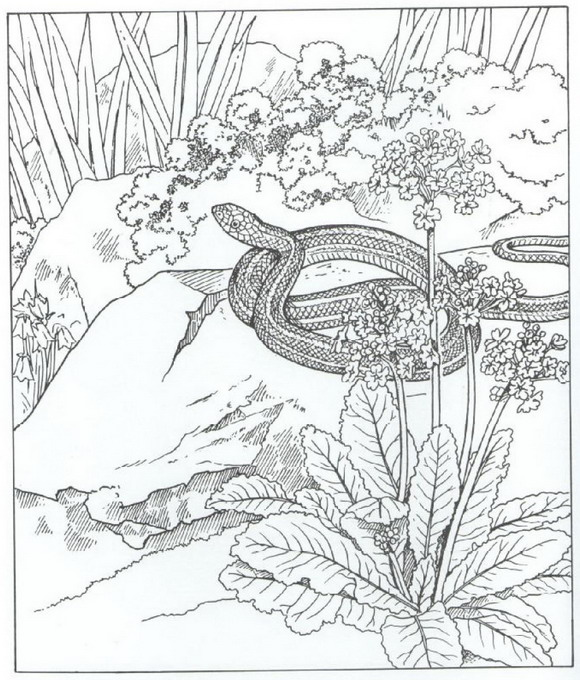 th?id=OIP.jDBRPmkQ_EtHysseb326HwD_Es&pid=15.1 additionally deer hunting coloring pages on coloring pages for adults deer including coloring pages for adults deer 2 on coloring pages for adults deer along with wolf wildlife coloring pages on coloring pages for adults deer as well as coloring pages for adults deer 4 on coloring pages for adults deer