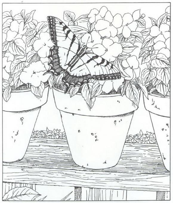 Vlinder Kleurplaten Voor Volwassenen.Kleurplaten En Zo Kleurplaat Van Vlinder