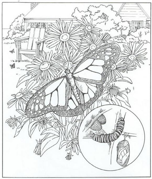 kleurplaten en zo vlinders