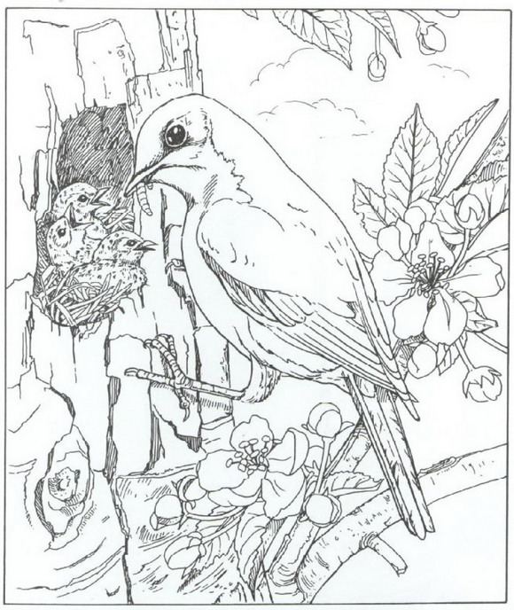 free wild birds coloring pages - photo#36
