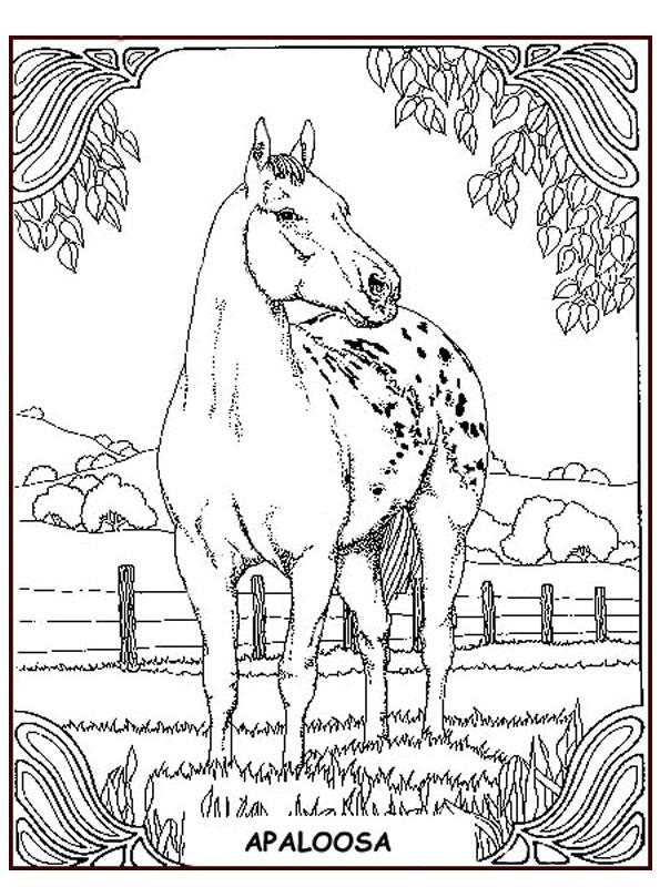 Kleurplaten Paarden In De Wei.Kleurplaten En Zo Kleurplaten Van Paarden