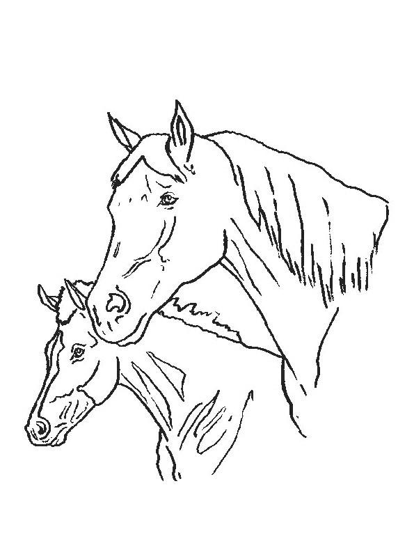 Kleurplaten En Zo 187 Kleurplaat Van Paarden