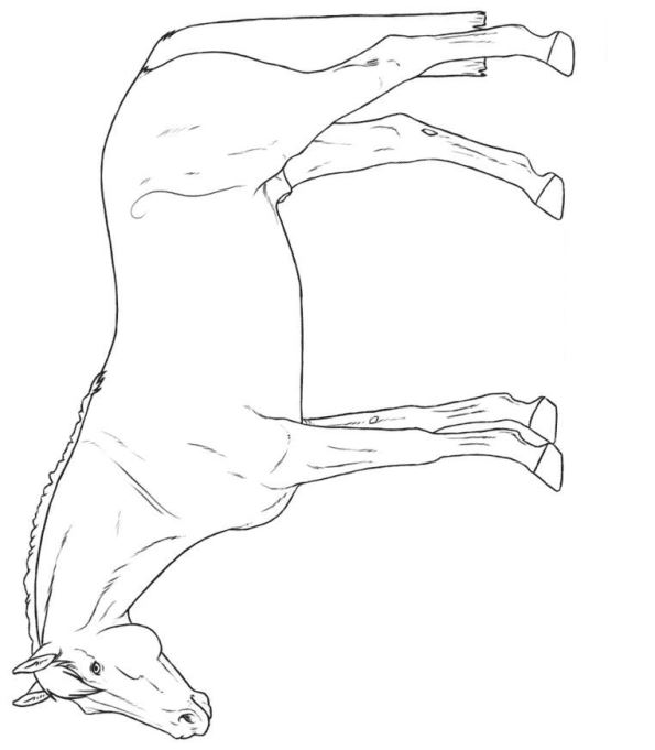 Kleurplaat Paarden Rassen Kleurplaten En Zo 187 Kleurplaten Van Paarden Rassen