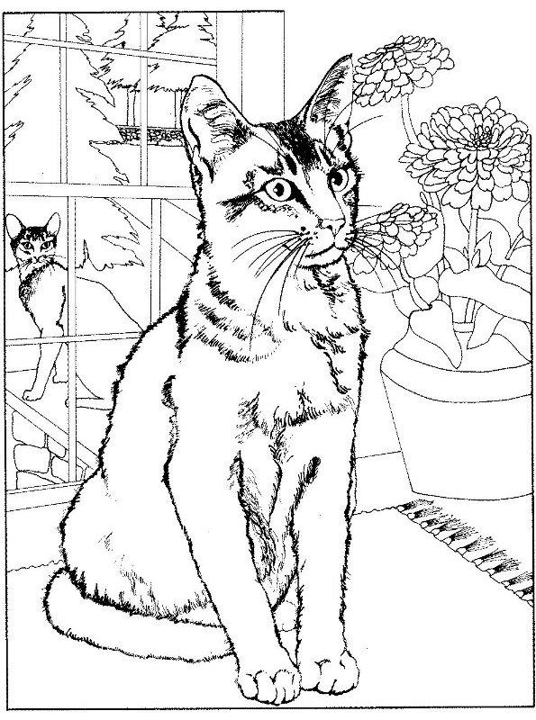 Kleurplaten en zo kleurplaten van poezen en katten for Cat coloring pages for adults