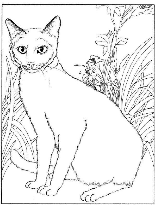Afbeeldingen Kleurplaten Poezen Kleurplaten En Zo 187 Kleurplaat Van Poezen En Katten