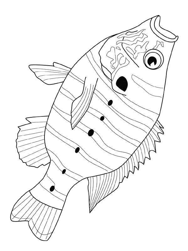 kleurplaten en zo 187 kleurplaten vissen