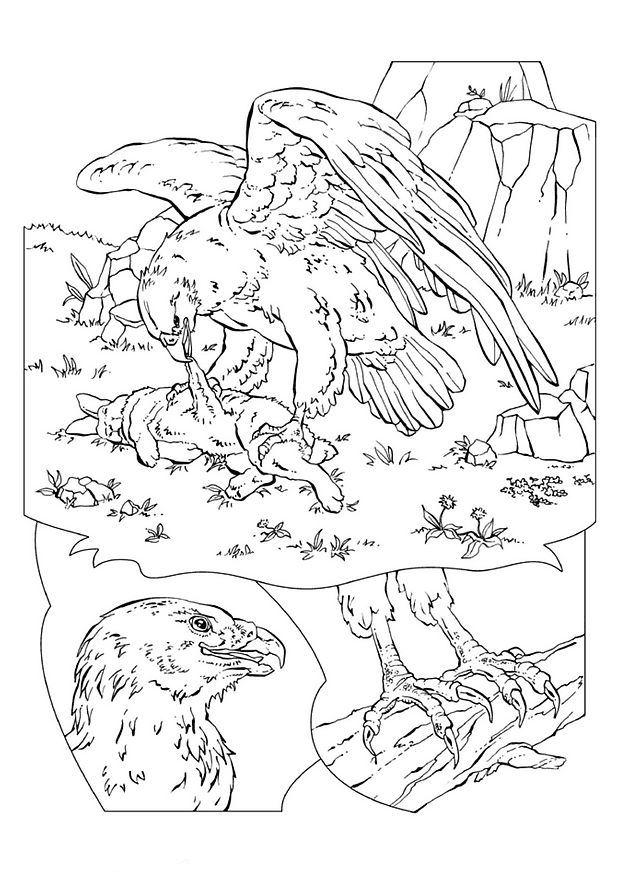 Kleurplaten Vogels Printen.Kleurplaten En Zo Kleurplaten Van Vogels