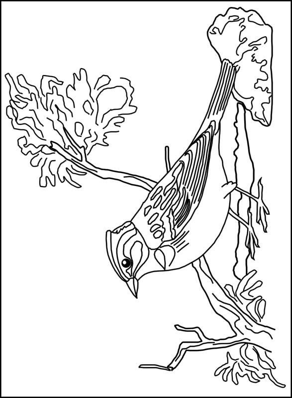 Kleurplaten Vogels.Kleurplaten En Zo Kleurplaten Van Vogels