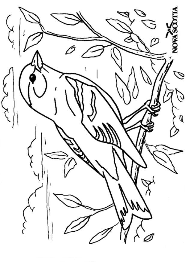 Kleurplaten Vogels In De Winter.Kleurplaat Vogel In De Winter Ausmalbilder Ausmalbilder Zaunknig