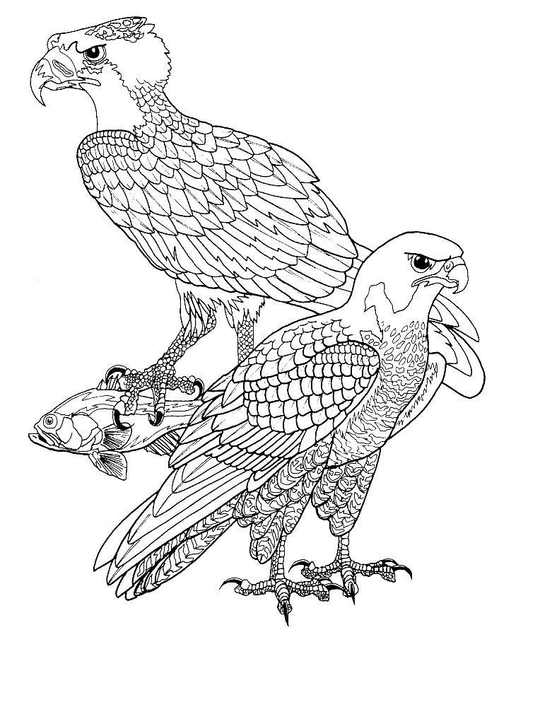kleurplaten volwassenen vogels