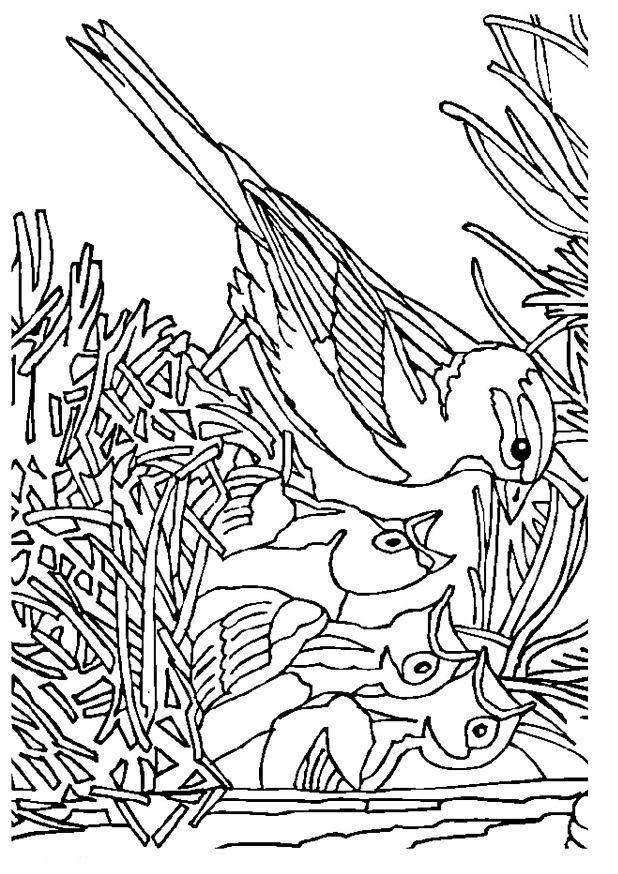 Kleurplaten En Zo 187 Kleurplaat Van Vogel Met Nest