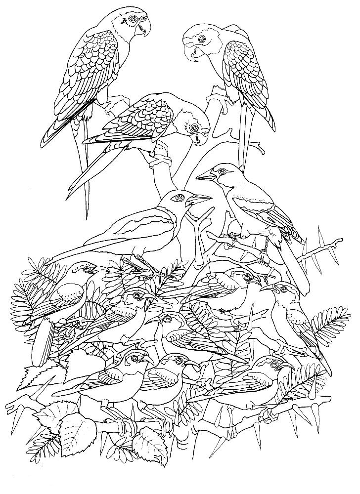 Adult Coloring Pages Hawlk
